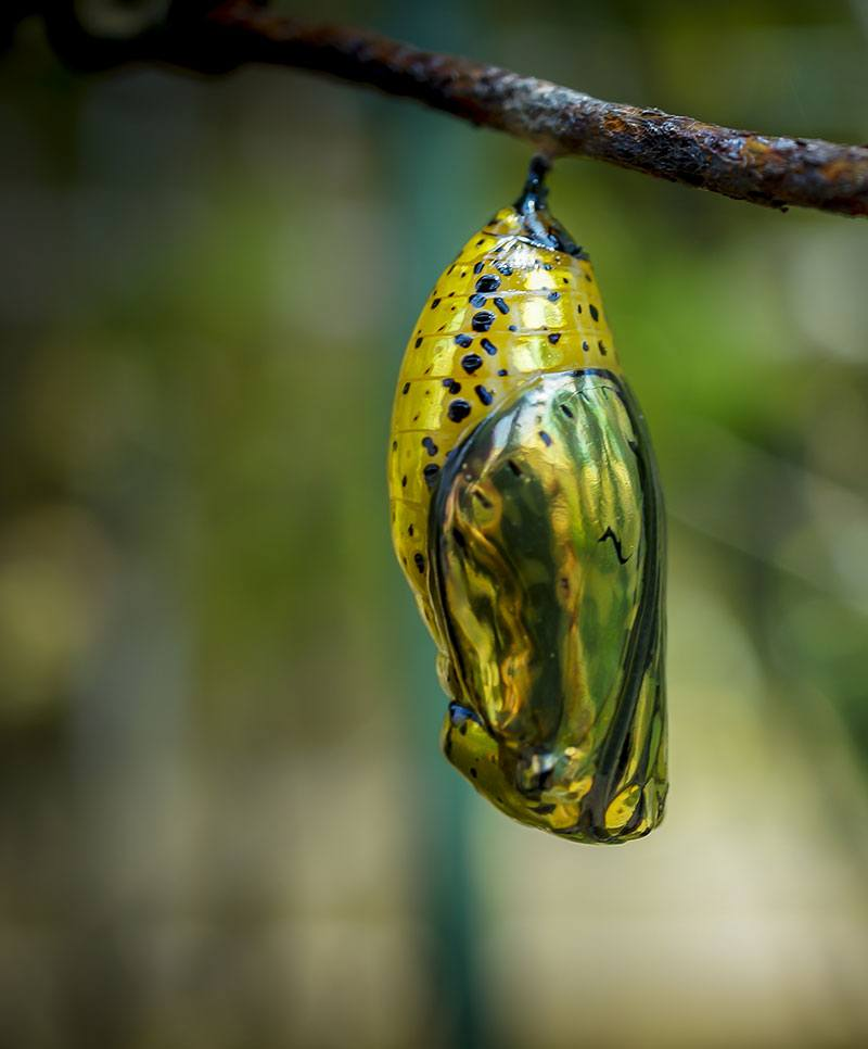 photo of cocoon